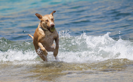 thoroughly: Dog playing in the sea at noon Stock Photo