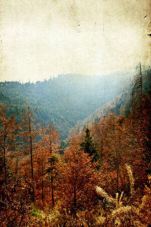 autmn: Vintage photo of autmn forest Stock Photo