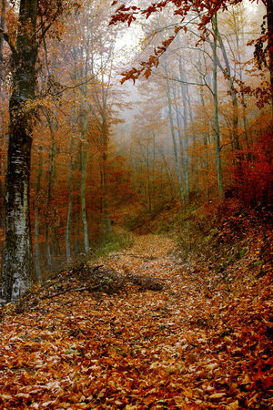 Leaves covered path in the colored  autumn forest photo