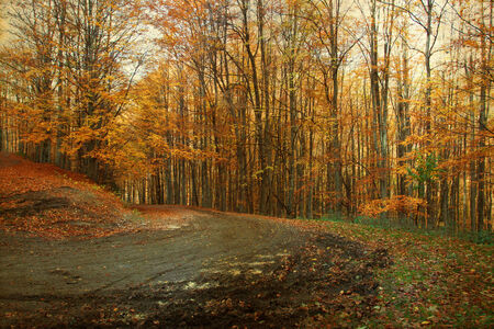 Vintage photo of curving road in autumn forest photo
