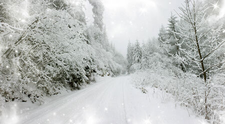 Christmas background with snowy path in the forest photo