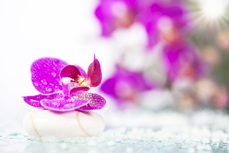 Spa still life with pink orchid and white zen stone in a serenity pool Stock fotó