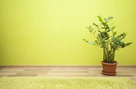 vase plaster: Plant in an empty green room