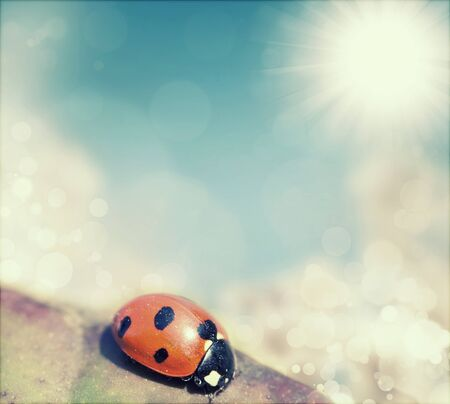 Spring background with blue sky and ladybird on a leaf photo