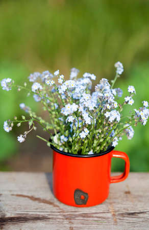 oldish: Summer background with forget me not flowers in a jar on wooden background Stock Photo