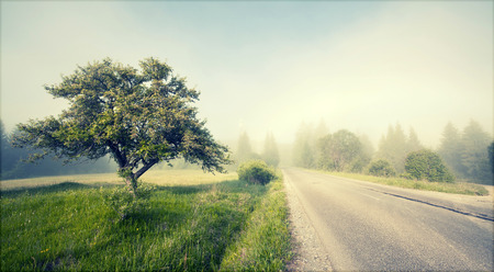 single tree: Rural road in morning fog in the summer Stock Photo