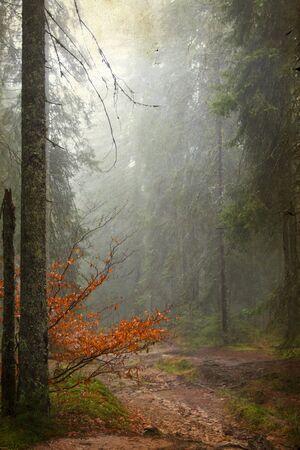 estado del tiempo: Foto de la vendimia de la v�a a trav�s del bosque de oto�o