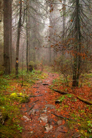 pathway: Vintage photo of pathway through the autumn forest
