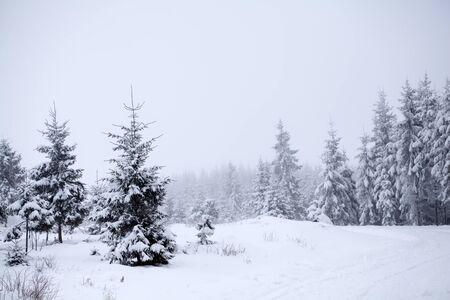 clima: La nieve cubr�a los �rboles de pino en las monta�as de invierno Foto de archivo