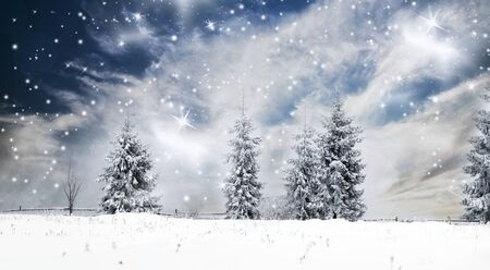 pine forest: Christmas background with snowy pine forest
