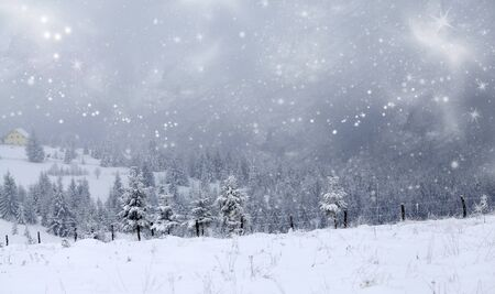 snowy: Christmas background with snowy pine forest