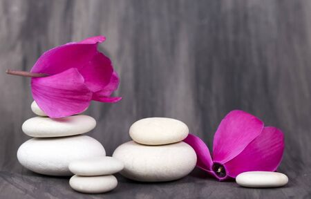 spa still life: Spa still life with pink orchid and white zen stone on dark background Stock Photo