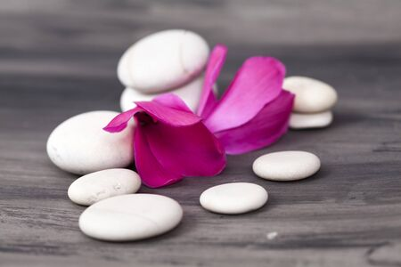 spirituality therapy: Spa still life with pink orchid and white zen stone on dark background Stock Photo
