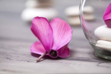 tea candle: Spa still life with pink orchid, white zen stone and tea candle on dark  background Stock Photo
