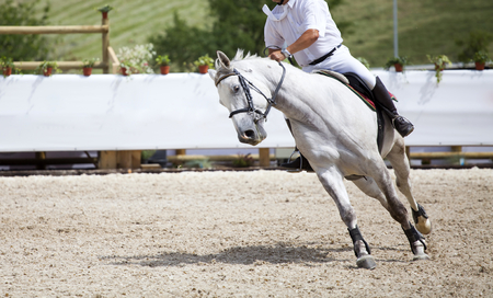 Horseman riding its purebreed horse at equestrian competition Stock Photo