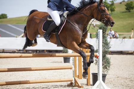 uomo a cavallo: Cavaliere a cavallo il suo cavallo purebreed al concorso ippico