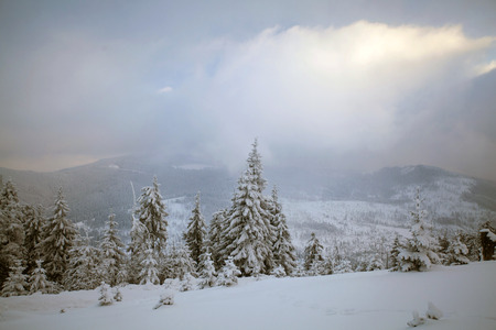 hoarfrost: Snow covered woods in the Carpathian mountains and beautiful abtract sky