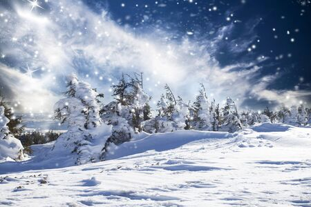 Snow covered pine forest in the mountains