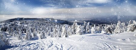 Snow covered pine trees in the mountains