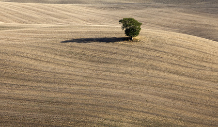 Lonely tree in the plowed field - Beautiful landscape background Stock Photo