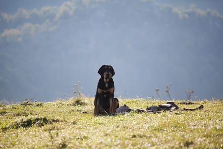 Abandoned, sad bloodhound in the mountains