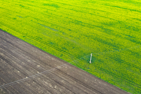 Aerial drone view of cultivated rapeseed plantation field. Blooming oilseed rape flowers from above as abstract natural background.