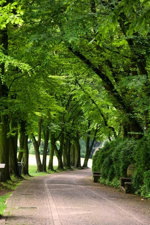 Pathway in summer park