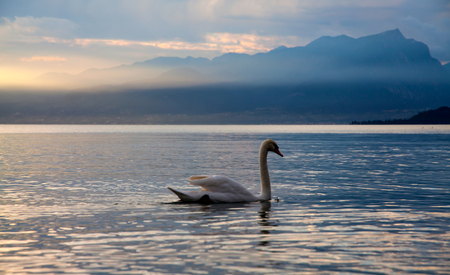Idyllic sunset over Lake Garda with beautiful swans on the lake Archivio Fotografico