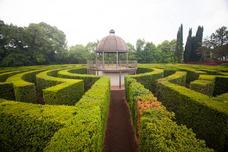 Green bushes circular labyrinth, hedge maze.