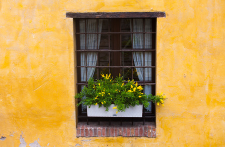 Old styled window with green plant on a yellow wall