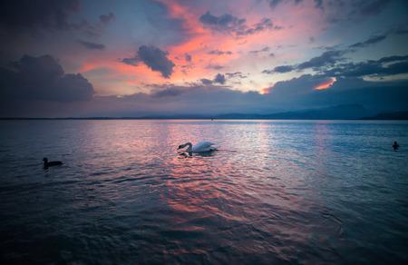 Idyllic sunset over Lake Garda with beautiful swans on the lake