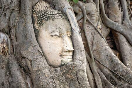 Ayutthaya Buddha Head statue with trapped in Bodhi Tree roots at Wat Maha That (Ayutthaya), Thailand Stockfoto