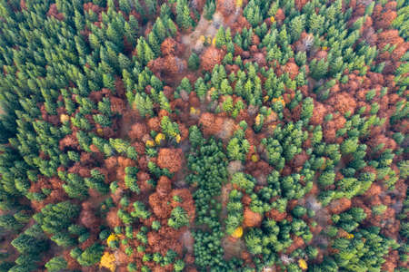 Aerial top view of autumn forest. Texture of forest view from above.