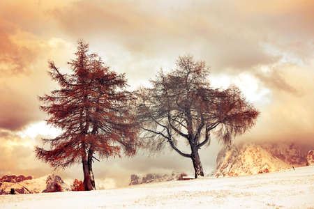 Larch trees in winter snowy mountains