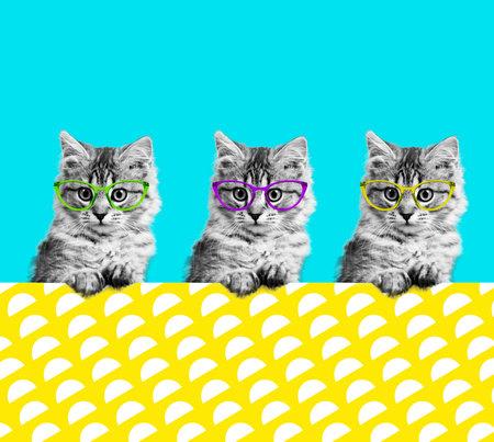 Contemporary art collage. Cat in stylish vintage sunglasses. Minimal fun art Foto de archivo