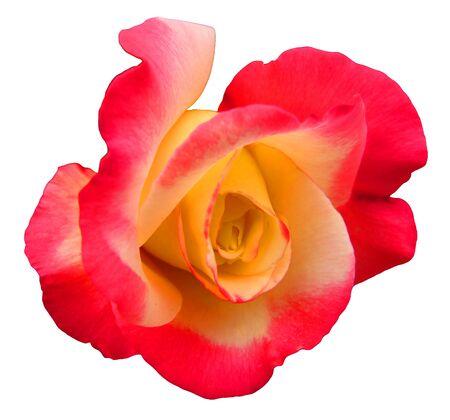 Flower Isolated Фото со стока