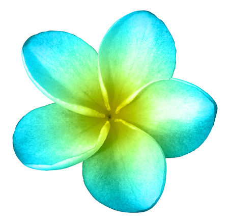 Blue and Yellow Plumeria Isolated