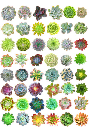 Succulents Isolated