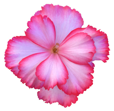 Flower Isolated Stock Photo