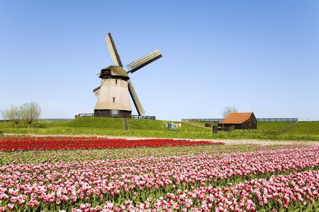 tulips and windmill 5 Stock Photo