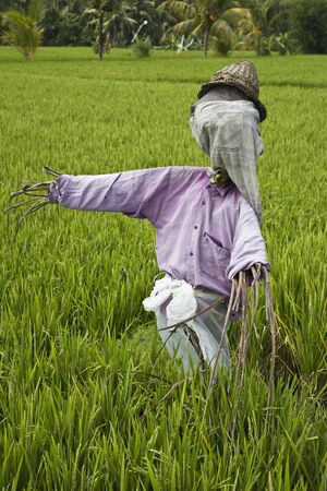 ricefield: Scarecrow Stock Photo