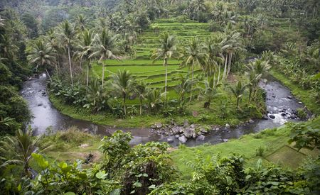 Bali ricefield Stock Photo - 3576210