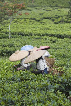 plantar: Tee-Kommissionierer