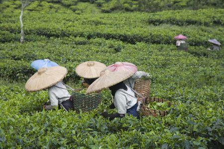 fu�sohle: Tee-Kommissionierer