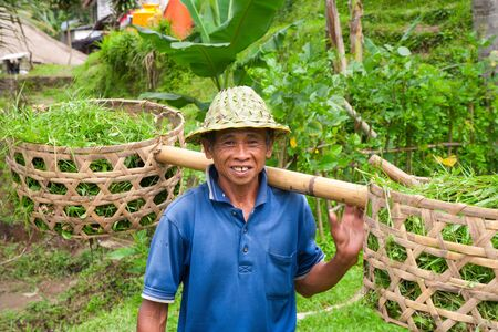 indonesia people: Rice farmer Stock Photo
