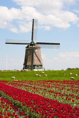Tulips and windmill Stock Photo - 9497393
