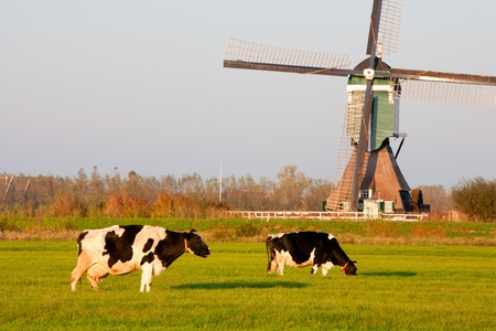 traditional windmill: Traditional Dutch windmill