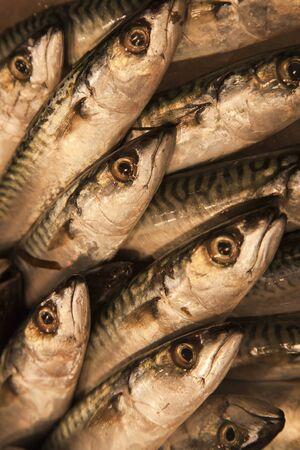 fish vendor: Fresh fish Stock Photo