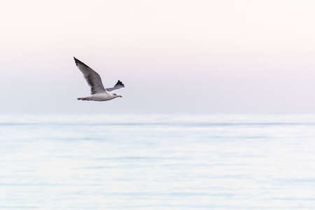 A seagull flying above the sea with a pastel color background Banco de Imagens