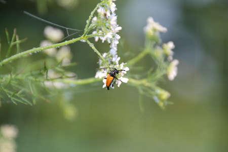 Meadow matin